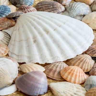 sea-shells-2215408_1920