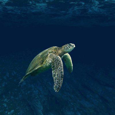 turtle-4032569_1920